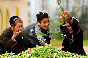 Лікування застуди по-ізраїльськи - курячий бульйон